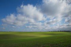 Groen gebied, landbouw jonge spruiten van tarwe, gerst Stock Afbeelding