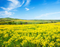 Groen gebied met bloemen onder blauwe bewolkte hemel Stock Afbeelding