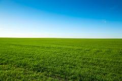 Groen gebied met bluhemel Royalty-vrije Stock Foto's