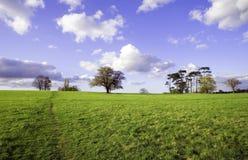 Groen gebied met bomen en hemel Royalty-vrije Stock Foto's
