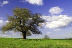 Groen gebied met bomen en hemel Stock Afbeeldingen