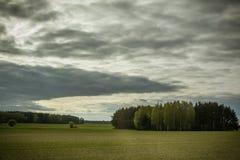 Groen gebied met een bos van bomen op donkere de zomerdag Stock Foto's