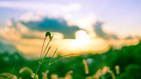 Groen Gebied met een Natuurlijke Mening stock afbeelding