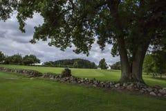 Groen gebied met een steenmuur en een grote drie-gestamde boom Stock Foto