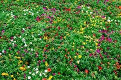 Groen gebied met kleine kleurrijke bloemen bij een botanische tuin voor een achtergrond royalty-vrije stock afbeelding