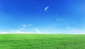 Groen gebied onder blauwe hemel Royalty-vrije Stock Afbeeldingen