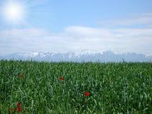 Groen gebied onder witte wolken stock fotografie