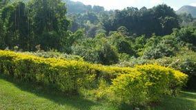 Groen gebied op de berg Stock Afbeeldingen