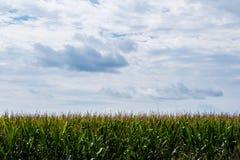 Groen gebied op een zonnige bewolkte dag royalty-vrije stock fotografie