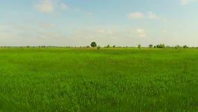 Groen gebied steadicam stock video