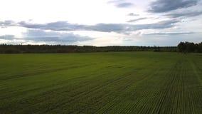 Groen gebied tegen dicht bos in het oogvlucht van de de zomervogel stock videobeelden