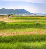 Groen gebied van gras met rode strepen en bergen op de horizon in Montenegro stock fotografie