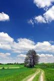 Groen gebied, weg, blauwe hemel en witte wolken royalty-vrije stock foto's