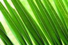 Groen gebladerte Royalty-vrije Stock Foto's