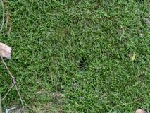 Groen geel mos op schors van boom voor achtergrond of textuur stock foto's