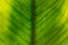 Groen-geelbladeren, de achtergrond van close-upfoto's stock foto's