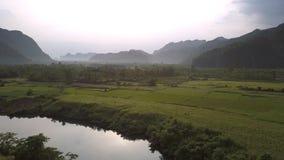 Groen gesegmenteerd pindagebied dichtbij dicht bos tegen heuvels stock video