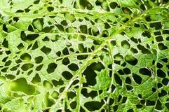 Groen gestippeld blad stock afbeeldingen
