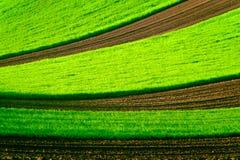 Groen golvend gebied in Zuid-Moravië Stock Fotografie