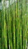 Groen Groen Gras stock afbeelding