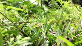 Groen gras stock footage