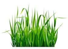 Groen gras royalty-vrije illustratie