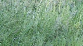 Groen Gras stock videobeelden