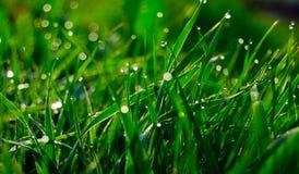 Groen gras (4) royalty-vrije stock fotografie