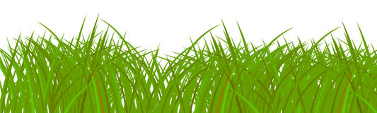 Groen gras Vector Illustratie