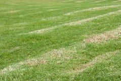 Groen gras Royalty-vrije Stock Afbeeldingen