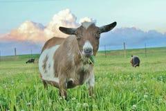 Groen gras Royalty-vrije Stock Foto