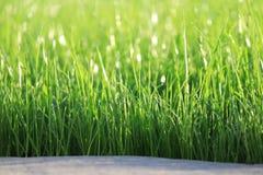 Groen gras Stock Foto's