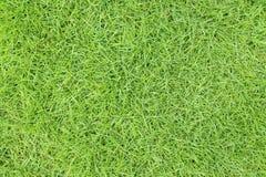 Groen gras Stock Afbeelding