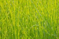 Groen Gras Abstract behang Als achtergrond Royalty-vrije Stock Afbeeldingen