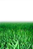 Groen gras, achtergrond Royalty-vrije Stock Afbeelding