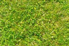 Groen gras als textuur of abstracte achtergrond Stock Fotografie