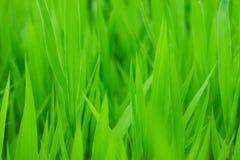 Groen gras backgorund Royalty-vrije Stock Fotografie
