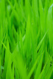 Groen gras backgorund Royalty-vrije Stock Foto's