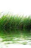 Groen gras bij water Royalty-vrije Stock Afbeeldingen