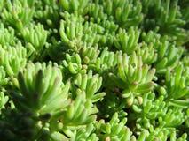 Groen gras, bladeren, tuin Stock Foto's