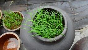 Groen gras in bloempot stock videobeelden
