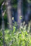 Groen gras in counterlight Royalty-vrije Stock Afbeeldingen