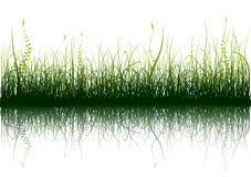 Groen Gras - dat op wit wordt geïsoleerd6 vector illustratie