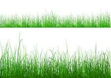 Groen Gras - dat op wit wordt geïsoleerda vector illustratie