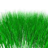 Groen gras dat op wit wordt geïsoleerdi Stock Foto's