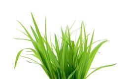 Groen gras dat op wit wordt geïsoleerdi Stock Foto