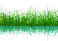 Groen Gras - dat op wit wordt geïsoleerdi vector illustratie