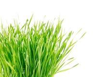 Groen gras dat op wit wordt geïsoleerdo Royalty-vrije Stock Fotografie