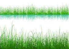 Groen Gras - dat op wit wordt geïsoleerdr vector illustratie