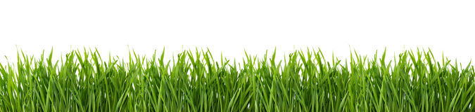 Groen gras dat op witte achtergrond wordt geïsoleerdg Royalty-vrije Stock Afbeelding